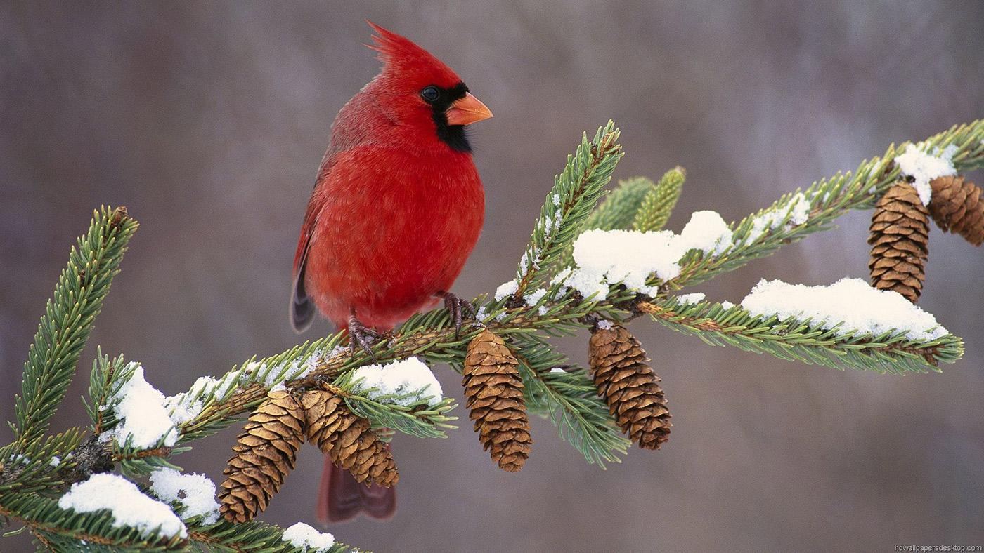 A Cardinal for Hope